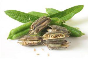 Jak stosować olejek sezamowy?